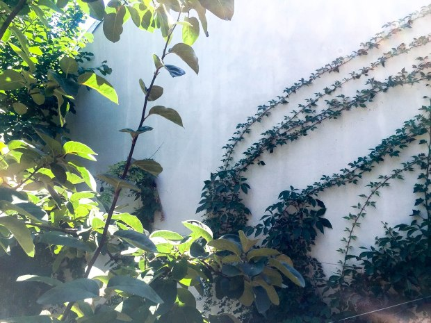 simbio-restaurant-healthy-food-vegan-review-summer-adventures-bucharest-romania-travelblog-eostories-6
